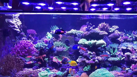 Mike talks with Sanjay about his amazing reef tank, older equipment and recovering from a tank crash