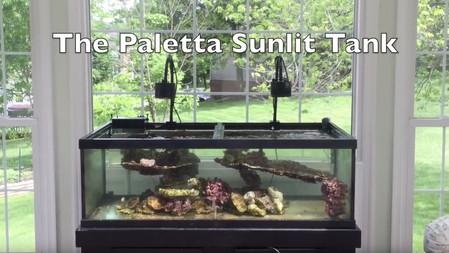 The Sunlit Reef Tank Project - Part I - how to setup a saltwater aquarium