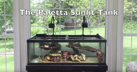 The Sunlit Reef Tank Project - Part I - how to setup a saltwater aquarium