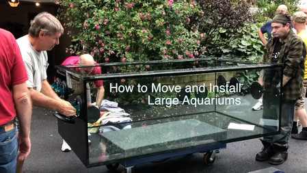 The Paletta 500 has arrived - how to move and install large aquariums