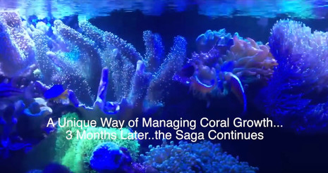 Managing Coral Growth...3 Months Later - reefkeeping videos - starting a saltwater aquarium
