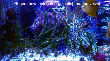 Rogers new tank & his secrets to curing Marine Velvet