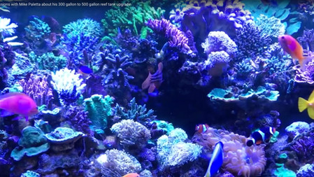 Early discussions with Mike Paletta about his 300 gallon to 500 gallon reef tank upgrade
