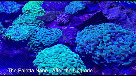 First look at the updated Paletta Nano -- Saltwater Tank Upgrade Americanreef - 10 gallon