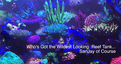 Who's got the best florescent reef tank .... Sanjay of course - coral fluorescence