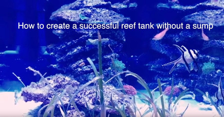 How to Setup a Reef Aquarium without a Sump - A Sumpless Coral Reef Aquarium