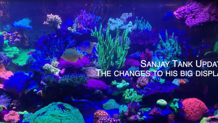 SanJay and Mike - new changes to Sanjay's saltwater reef tank - ozone and Nyos Torq to name a few