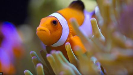 Coral Reef Aquarium Photography - How to Take Great Aquarium Photos - keeping a saltwater aquarium