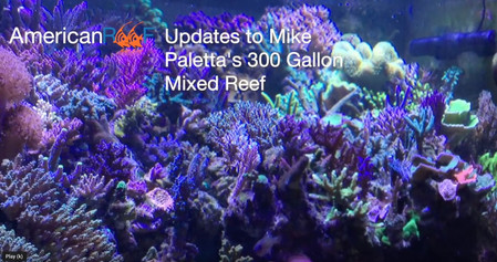 18 month update on Mike's 300 Gallon Mixed Reef - How to keep a saltwater aquarium - AmericanReef