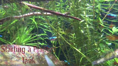 How to Setup a Planted Tank and Aquarium
