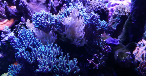 Tim's Reef Tank - Battling RTN and a Kalk overdose - New to Saltwater Reef aquarium