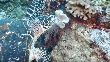 Raja Ampat - AmericanReef Diving Series