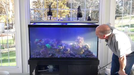 How to perform a tank swap - The Paletta Sun-Lit Tank - americanreef reefkeeping videos