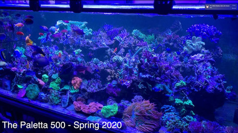 Paletta 500 Update - the effects of CO2