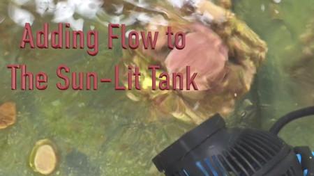 The Paletta Sunlit Reef Tank Project - Part II - how to start a saltwater aquarium