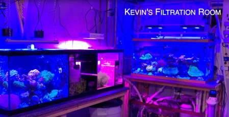 Kevin's Filtration Room - Three Reef Tanks One Skimmer