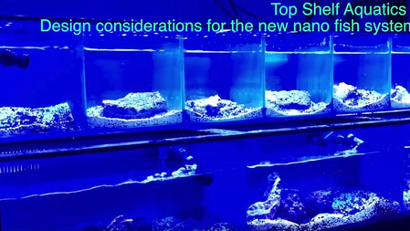 Designing the largest retail nano fish and Invert system in Florida (Maybe the US)