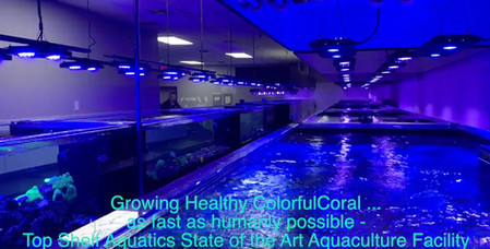 Growing Healthy Colorful Coral Quickly -The Top Shelf Aquatics State of the Art Aquaculture Facility