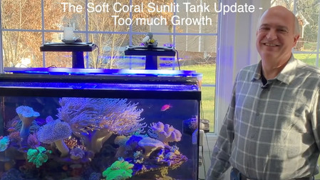 How much do soft corals grow - too much on the sunlit Paletta reef tank - Americanreef Reef Keeping
