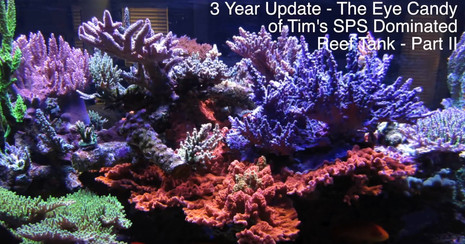 Part I - Tim's Beautiful 400 Gallon Reef - 1 Year Later - Coral Eye Candy - AmericanReef Reef Keeping Video