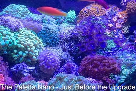 1 Year Update on the Paletta Nano - before he breaks it down - Saltwater Tank Upgrade Americanreef