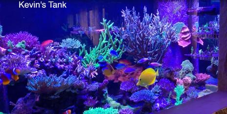 Kevin's Showpiece Reef Aquarium