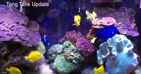 Two Year Tang Tank Update & How to Make HPD Cubes - starting a saltwater tank - reefkeeping video