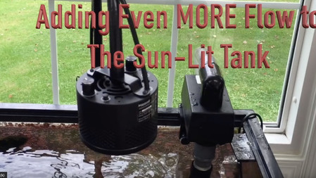 The Paletta Sun Lit Tank Update III