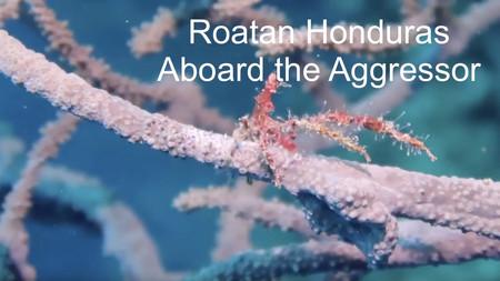 Roatan Honduras - Cayos Cochinos Dive - aboard the Roatan Aggressor - Americanreef Diving Series