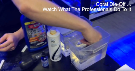 How to Stop Coral Die Off - Keeping your saltwater reef tank pest free