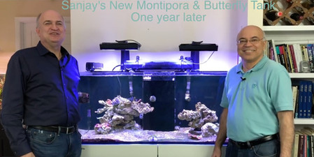 Sanjay Joshi - The Butterfly Tank and the lessons learned - starting a saltwater and coral reef tank