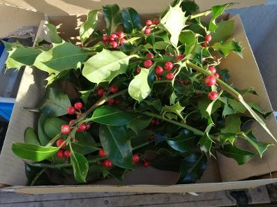Plenty of fresh sloes available. Fresh holly 10 sprigs only 7.99