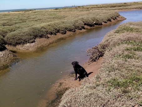 Out with Max checking the Samphire