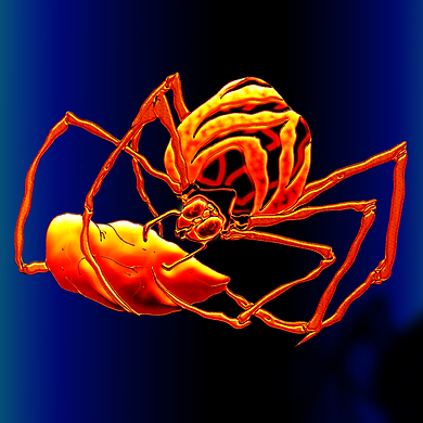 SpiderSpread-gold-web.png