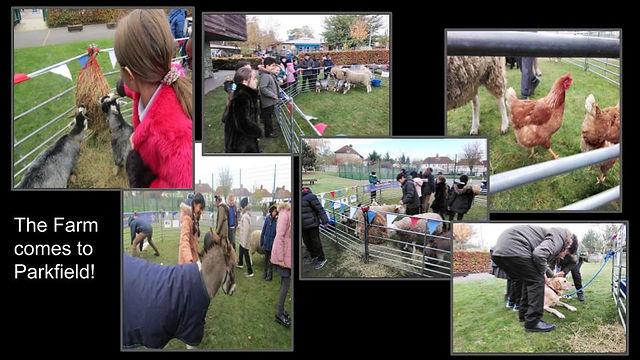 Yr 5 Farm day .jpg
