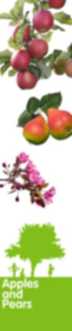 apple_150dpi.jpg