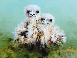 Falcon chicks