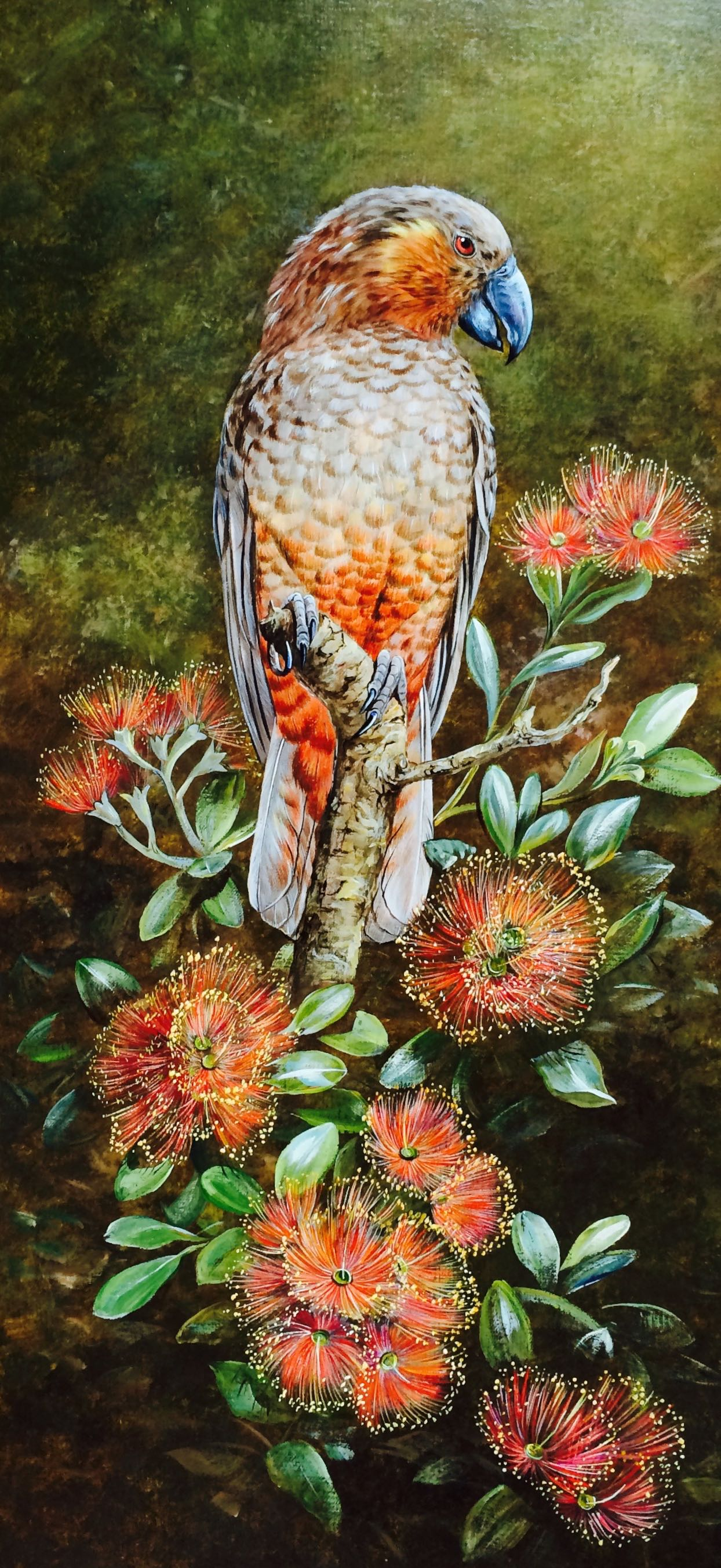 NZ Kaka on Rata