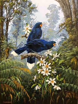 The Royal Maori Bird