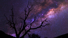 Night Scene Photography: How to Photograph the Milky Way