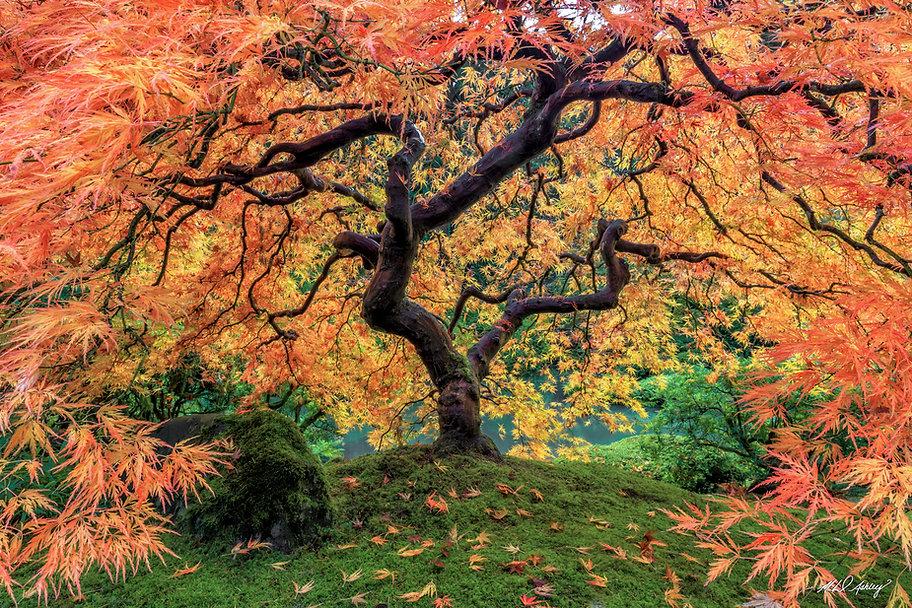 Autumn embrace.jpg