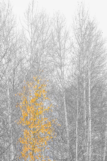Yellow Tree in Fog