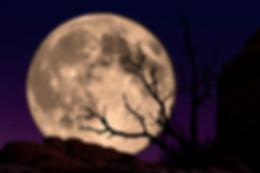 Super moon rising behind a dead tree in Hawaii