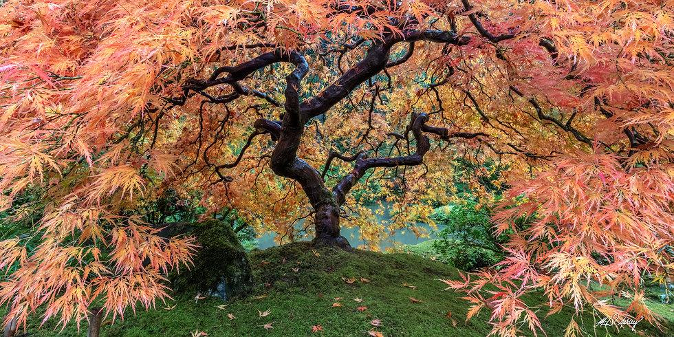 Autumn's Embrace Panoramic