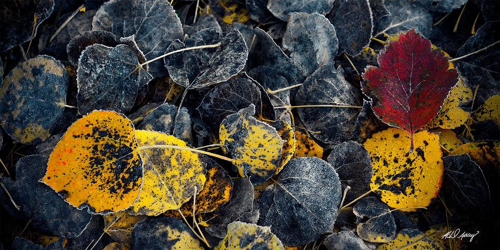 Autumn Moods Panoramic