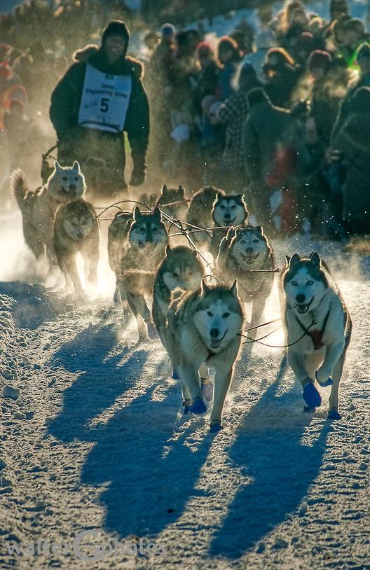 Dog Racing