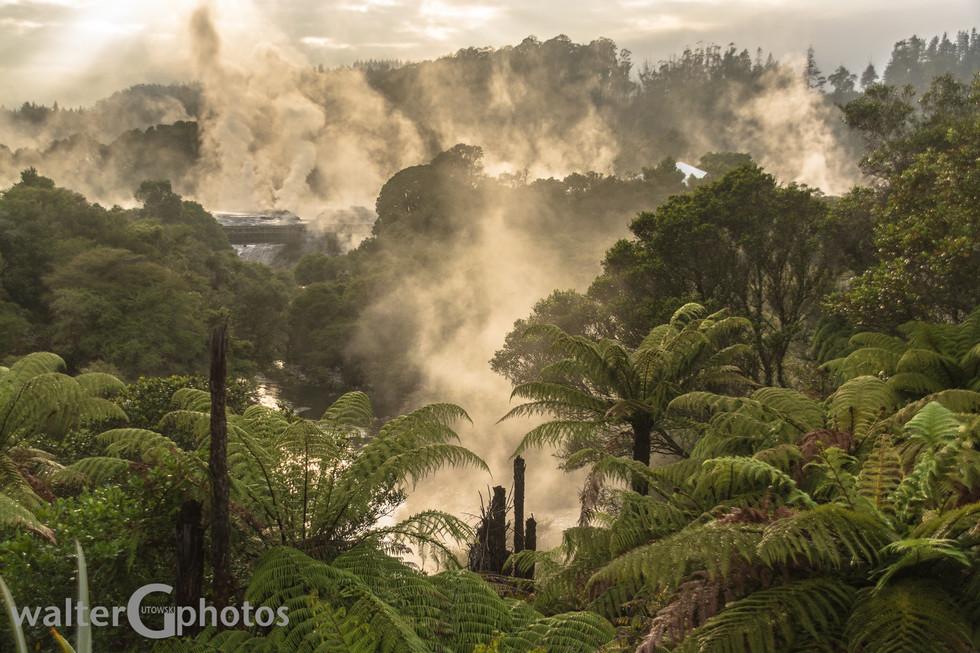 Te Puia, Rotorua, NI, New Zealand