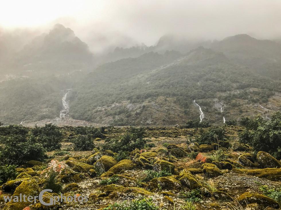 Rain, enroute to Franz Joseph Glacier, SI, New Zealand