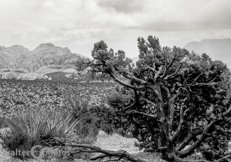 Landscape at Red Rock Canyon