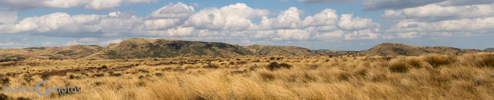 Landscape near Waiouru